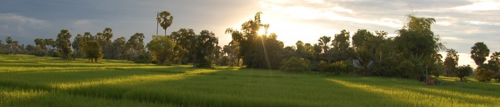 Sunrise over the rice fields